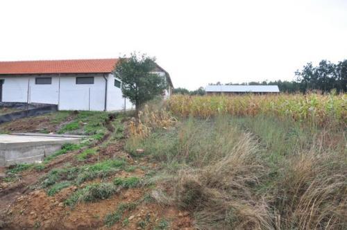 Construction d'une ferme bovine